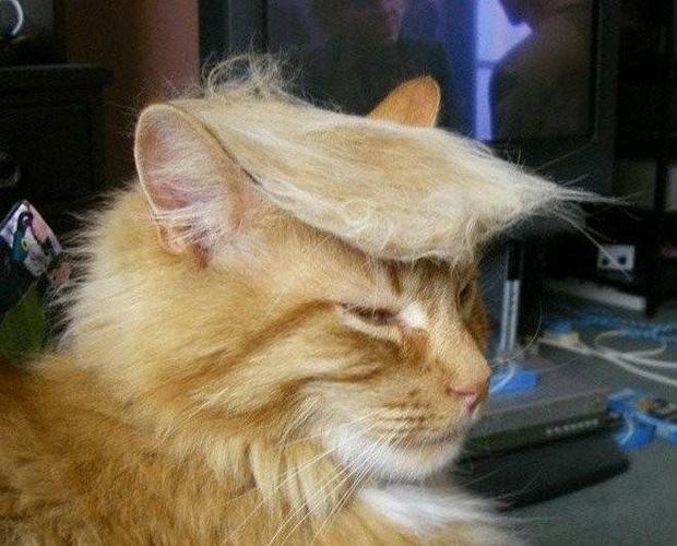 Фото №11 - Лучшие шутки об избрании Дональда Трампа президентом США