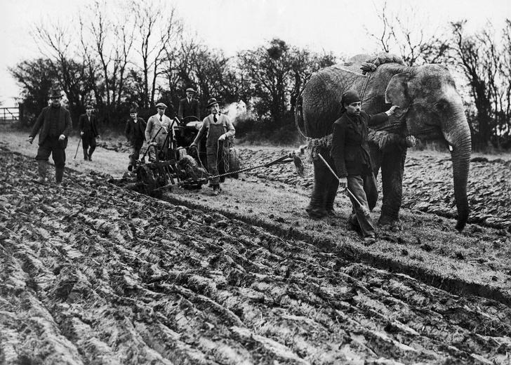 Слоны в деревне