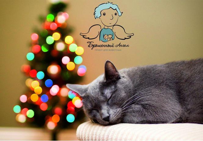 Сделай родным самый крутой новогодний подарок — забери домой кота!