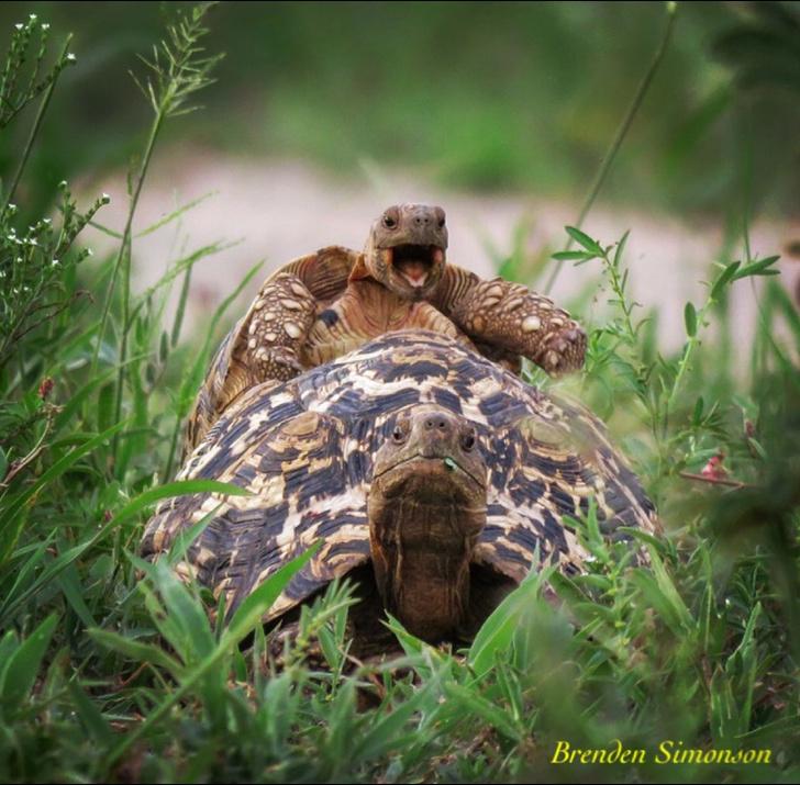 Фото №13 - Победители премии «Смешные фотографии дикой природы» 2016 года!