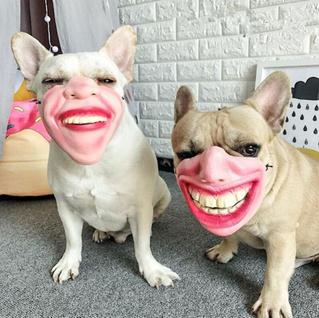 На Amazon продают немного странные собачьи намордники