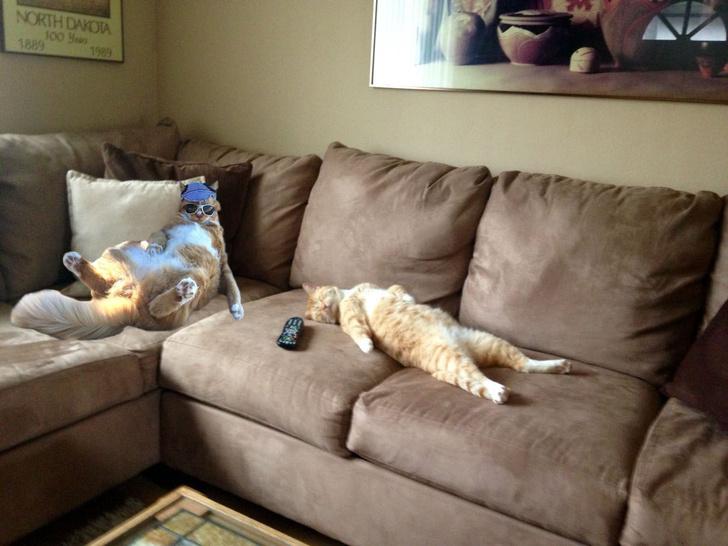 Фото №11 - Балдеющий кот — новый король фотожаб!