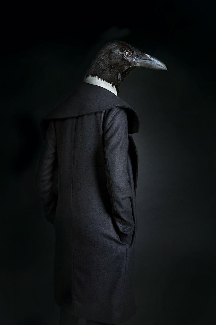 Фото №2 - Так вот как выглядит конь в пальто!