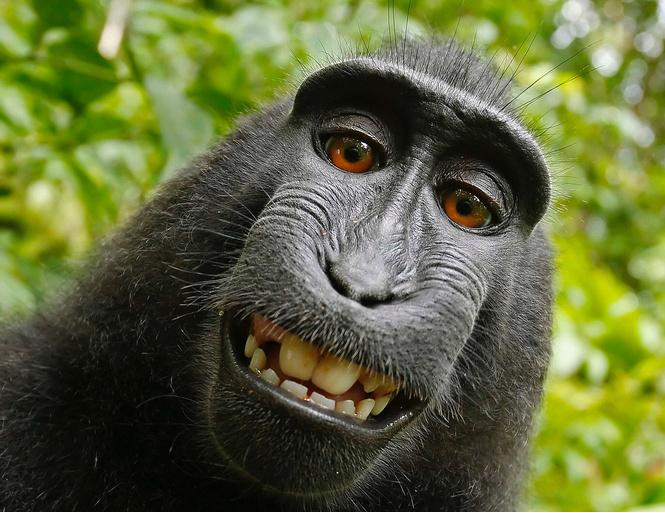 Людьми 2017 года стали много женщин и улыбающаяся макака
