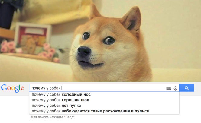 Ответы на самые частые «почему» про собак