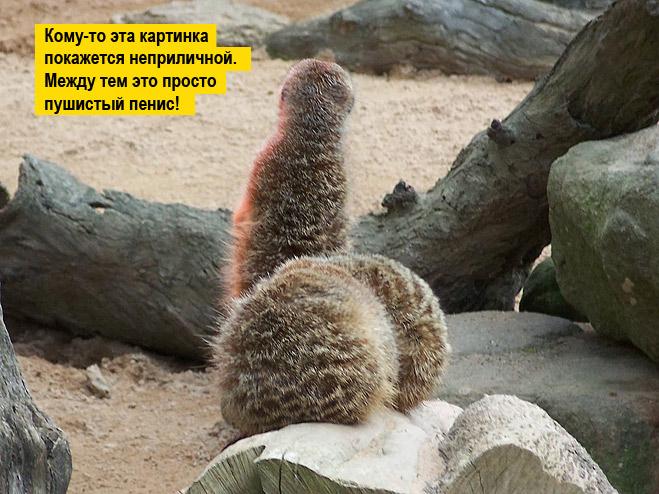 Фото №11 - 13 фото животных, которые тебя рассмешат