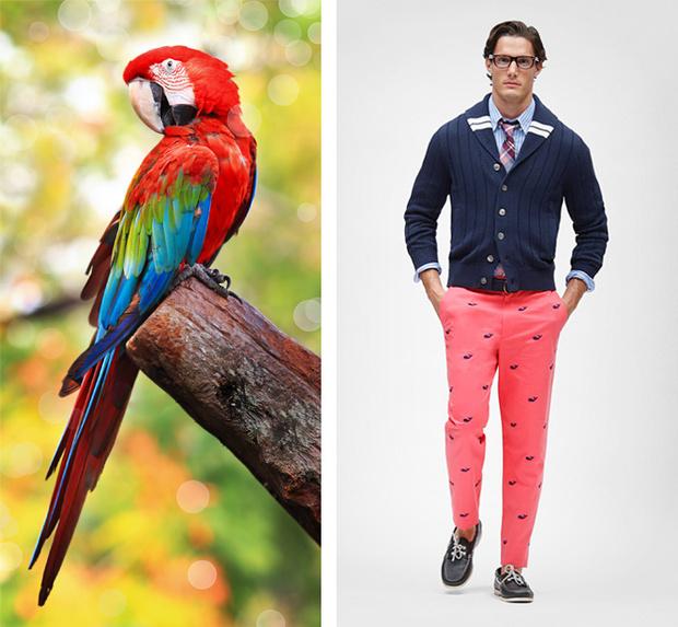 Преппи и попугай ара