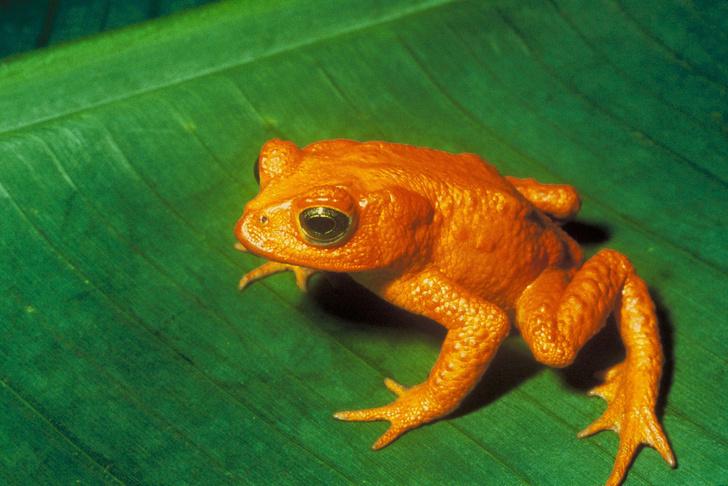 Фото №4 - 20 лучших фото жаб всех времен и народов!
