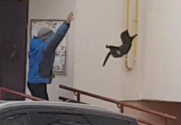 Фото №1 - Житель Башкирии прогнал из города дикого лося, бросив в него котом (видео)