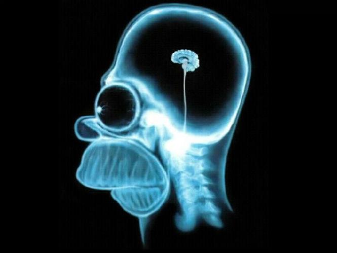 Фото №3 - 8 самых популярных заблуждений о мозге