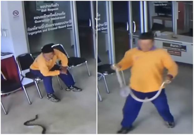 Фото №1 - Мужчина, пришедший в полицию подать заявление, попутно обезвредил змею (бесстрашное видео)