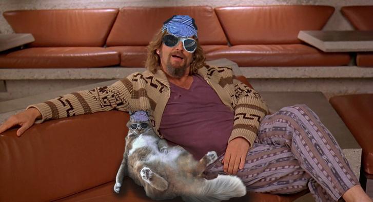 Фото №16 - Балдеющий кот — новый король фотожаб!