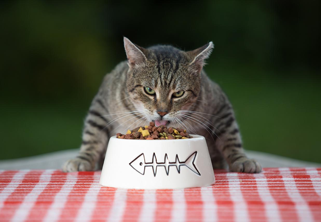 Как понимать кошку - 80 фото и полезная информация как понимать кошку