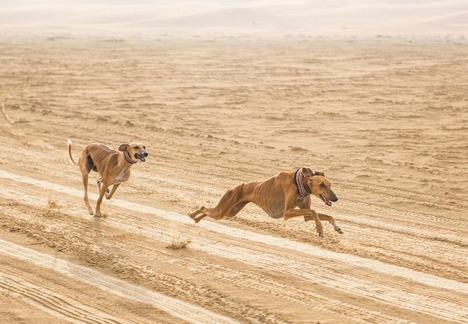 старожилы припоминают самых древних пород собак