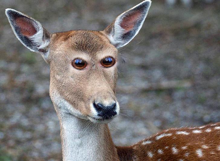 Фото №5 - Вот как выглядели бы животные, если бы глаза у них были спереди!