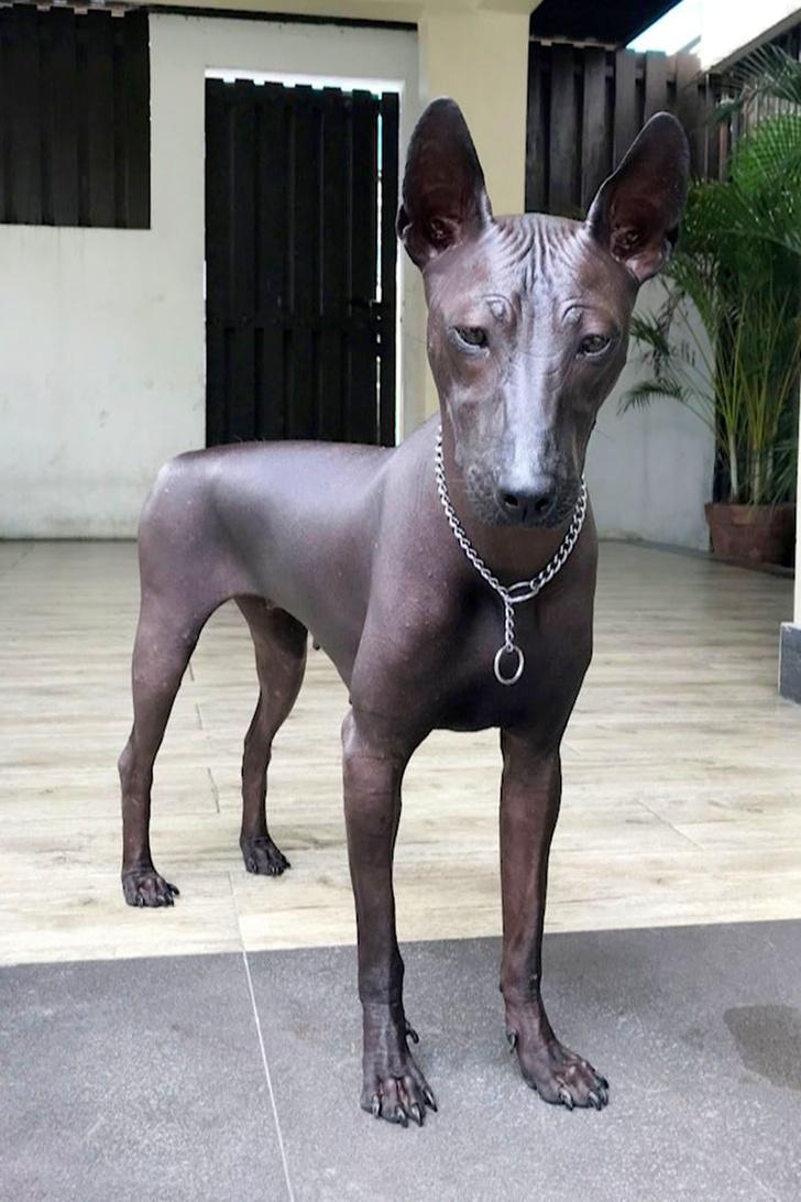 Фото №1 - Свежая оптическая иллюзия: собака или статуя?