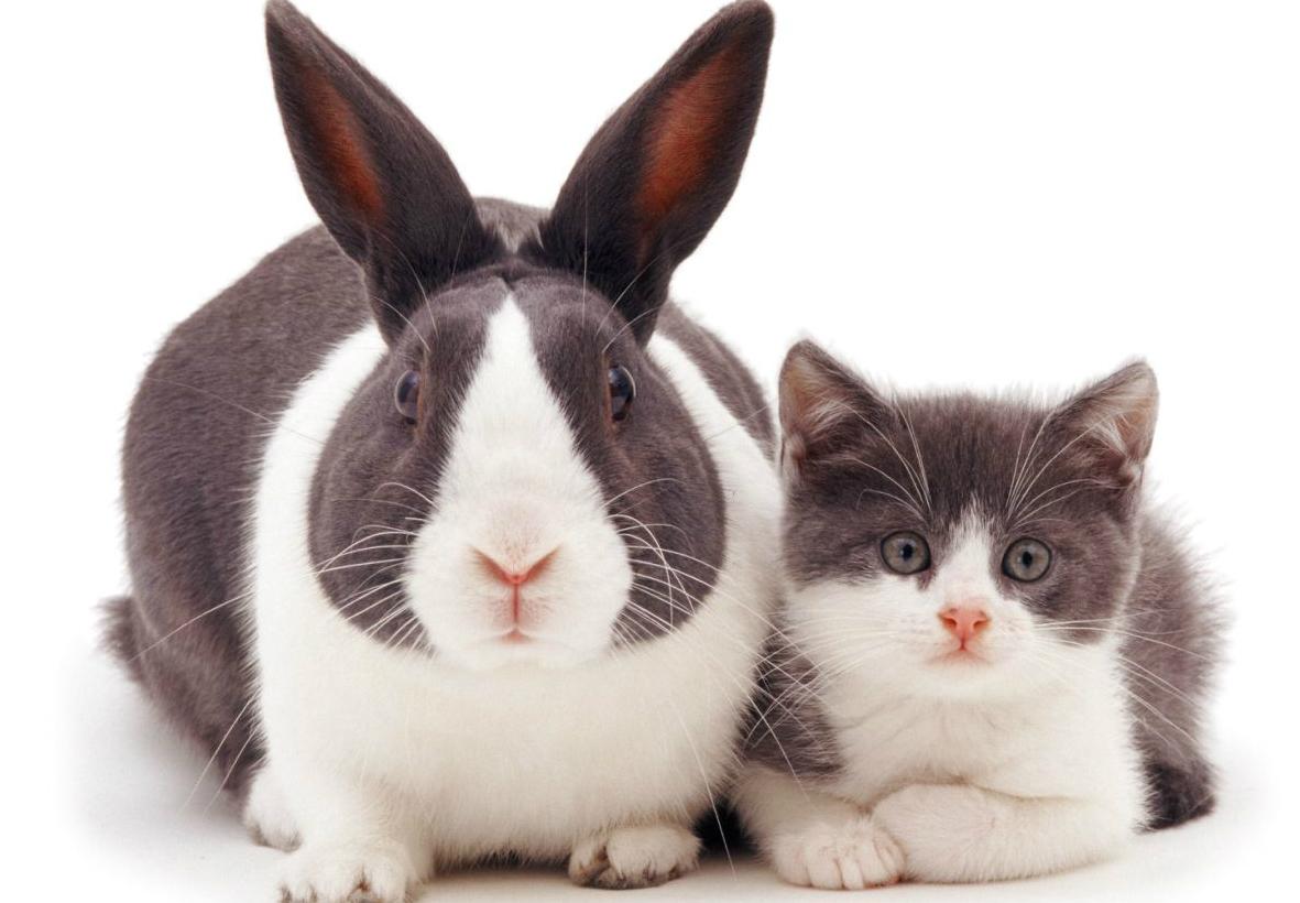 Добрый ночи, открытка котом кроликом