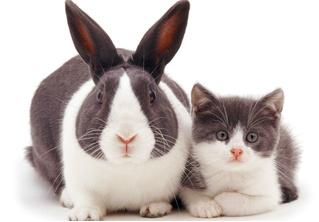 13 котят, снятых вместе со своими двойниками-кроликами
