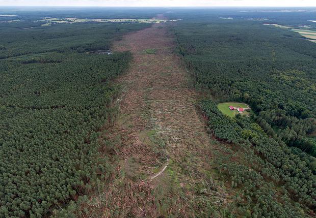 Фото №1 - История одной фотографии: прореха, которую смерч оставил после себя в лесу