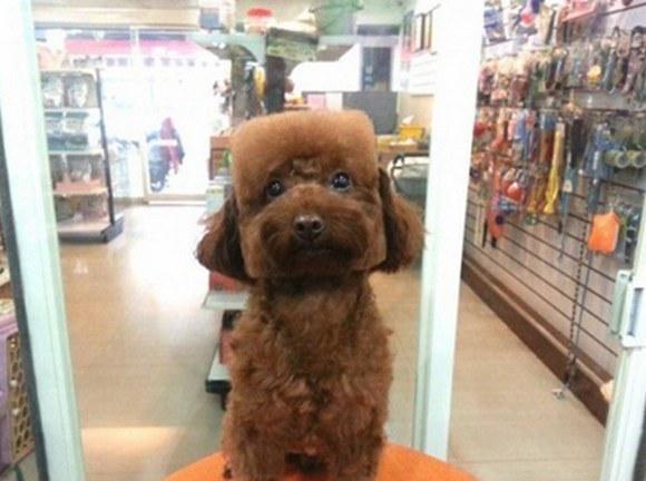 Фото №3 - Новый тренд на Тайване: геометрически правильные собаки