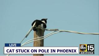 Как в Фениксе два часа спасали кота