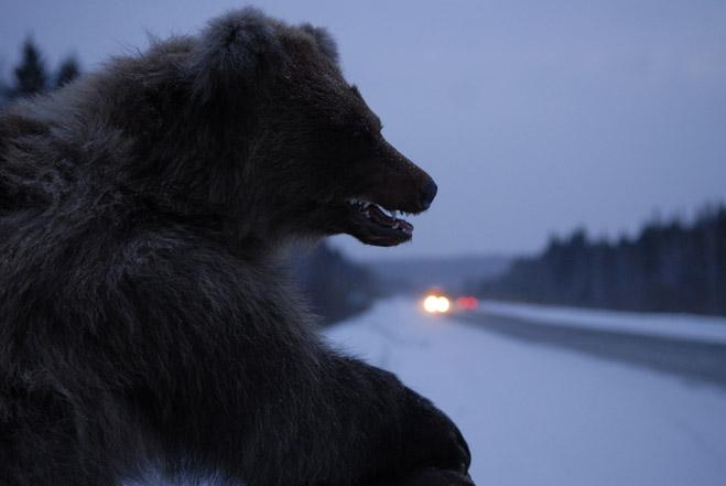 Фото №2 - Сибирская резня бензопилой