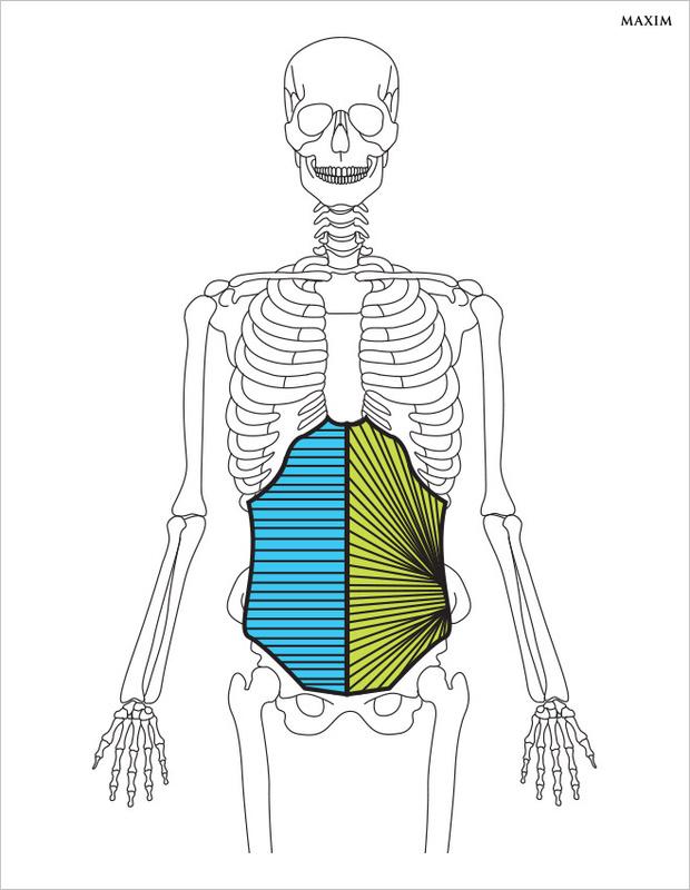 Поперечная мышца живота и внутренние косые мышцы