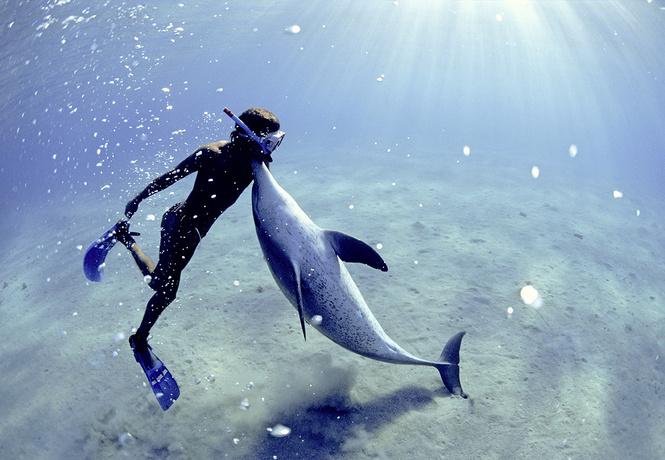 Итак, ты встретил в море дельфина. Как понять язык его движений? Запоминай...
