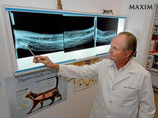 Рентгеновский снимок питона
