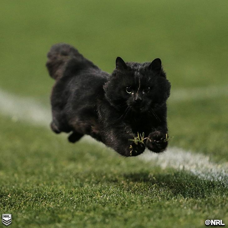 Шикарный черный кот