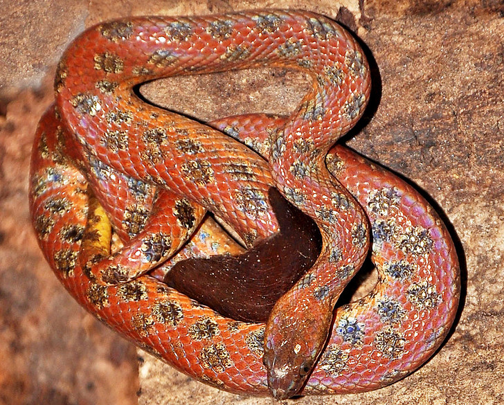 Фото №3 - Как завести дома сторожевую змею