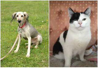 Котопёс недели: возьми из приюта терьериху Помпошу или кота Степушку