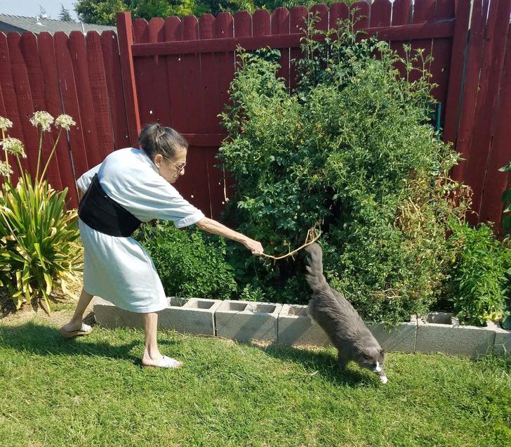 Фото №1 - Очень смешные фотожабы на пожилую женщину, прогоняющую кота