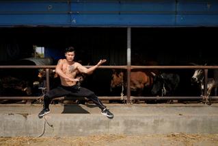 Китайский мастер боевых искусств сражается с быком (видео)