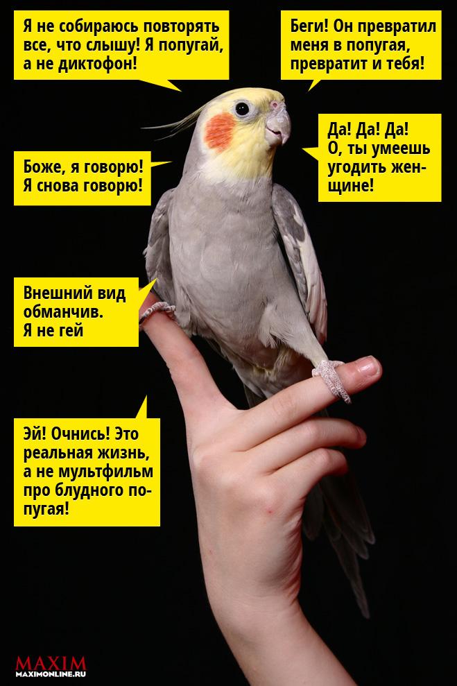 Фото №2 - 12 фраз, которым  обязательно нужно  обучить своего  попугая