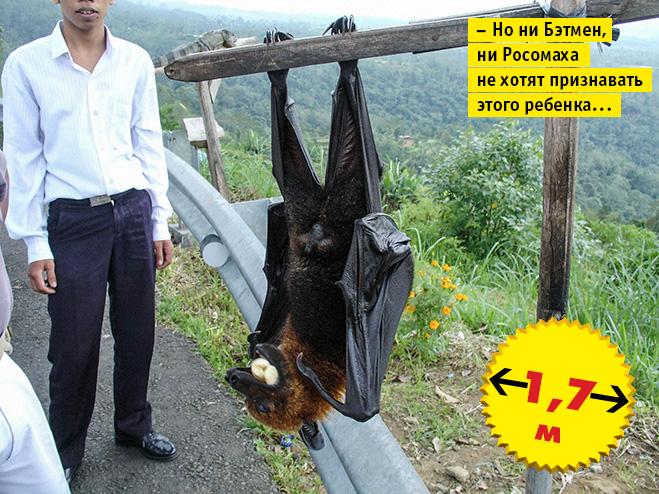 Фото №10 - Кто сказал «Вау!»: шокирующе огромные животные-переростки