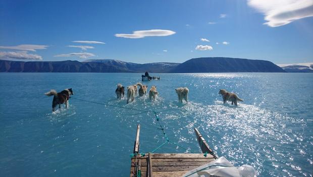 Фото №1 - Твит дня: собачья упряжка везет сани по растаявшему леднику в Гренландии