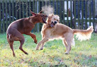 Как защититься от собаки. Пособие в гифках