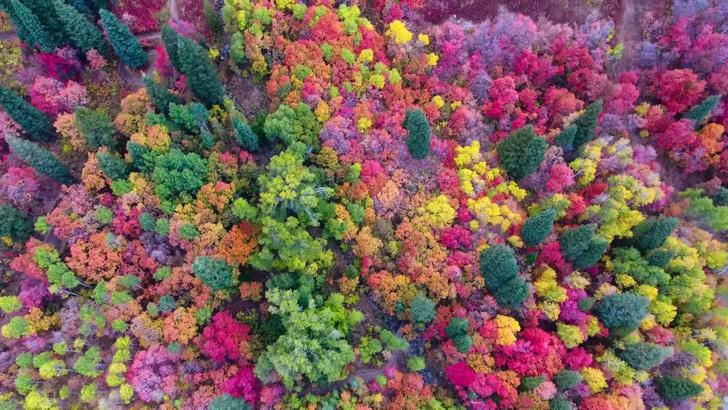 Фото №1 - Пролет над осенним лесом (видео и Instagram для медитации)