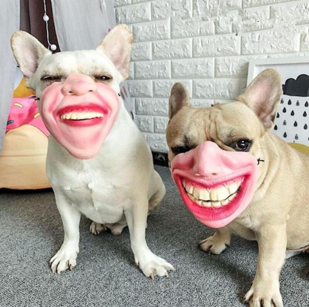 Фото №1 - На Amazon продают немного странные собачьи намордники