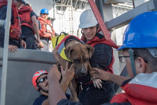 Фото №4 - Две американки и две собаки 5 месяцев дрейфовали в океане. Рассказываем, как они выжили (бонус — ВИДЕО чудесного спасения)