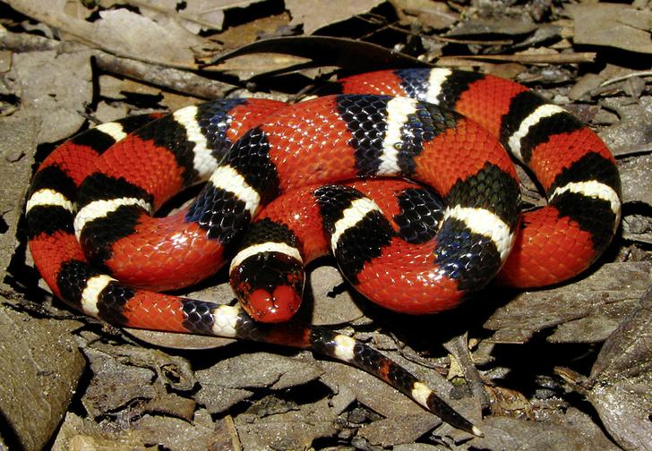 Фото №2 - Как завести дома сторожевую змею