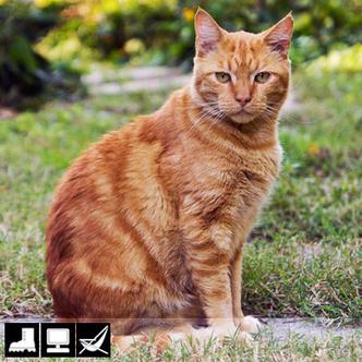 Фото №9 - Как выбрать домашнее животное в зависимости от типа твоего характера и размеров жилплощади