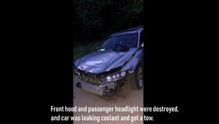 Водитель врезался в пуму и вдребезги разбил машину. А пума просто убежала