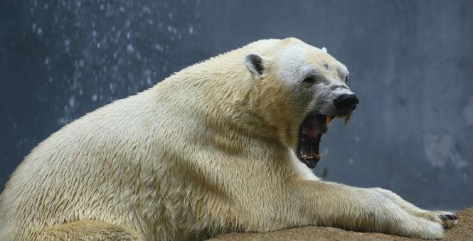 Фото №7 - 13 животных-гибридов, о существовании которых ты не подозревал