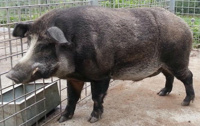 Фото №11 - 13 животных-гибридов, о существовании которых ты не подозревал