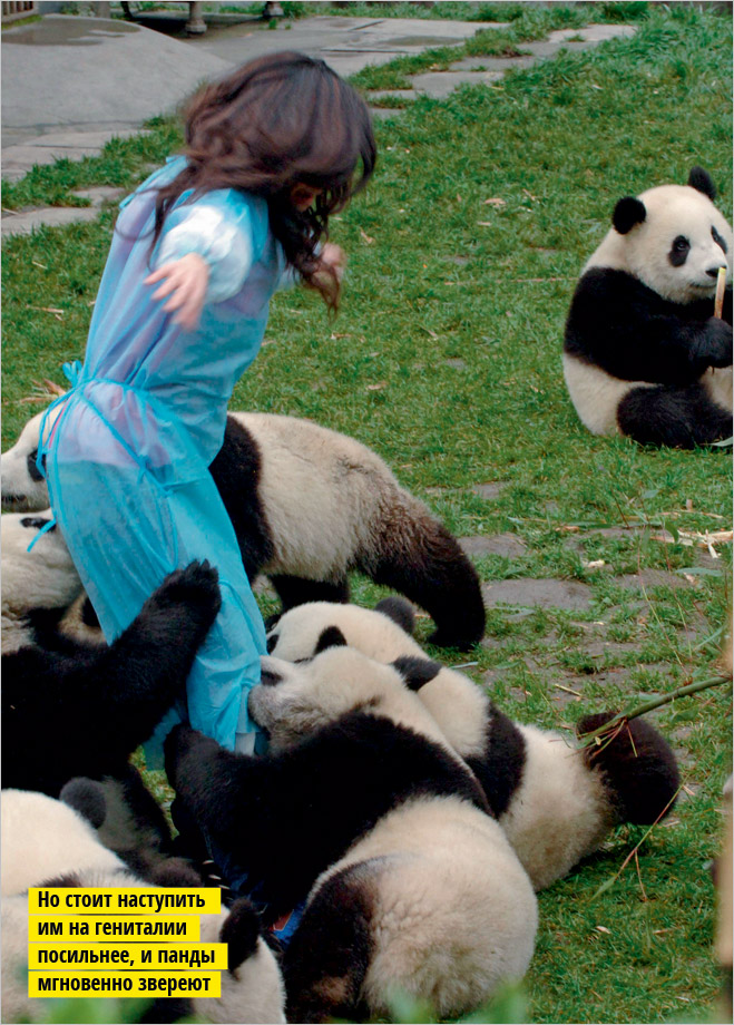 Фото №6 - Устроили из зоопарка цирк!