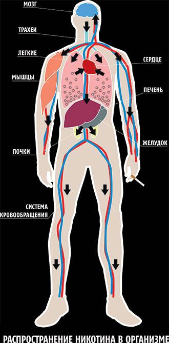 Как работает никотин