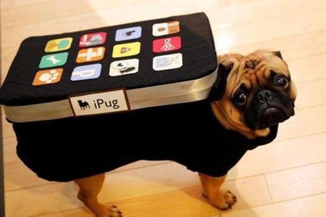 Фото №1 - Самые нелепые примеры косплея iPhone в истории!