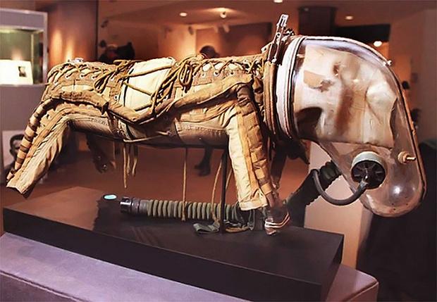 Фото №1 - Что носили советские собаки в космосе: те самые скафандры Белки и Стрелки